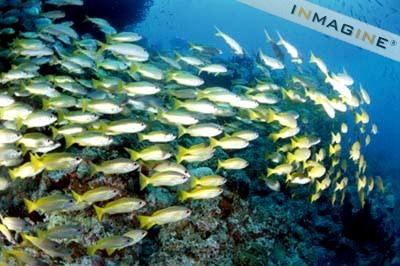 fish_school2